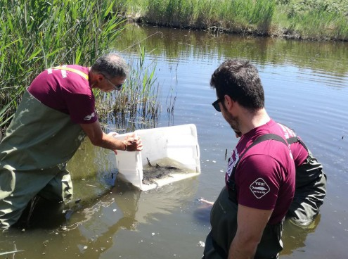 Duecento storioni reintrodotti in natura