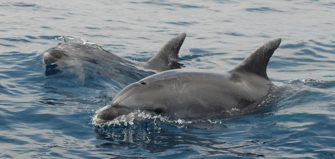 Delfiniamo